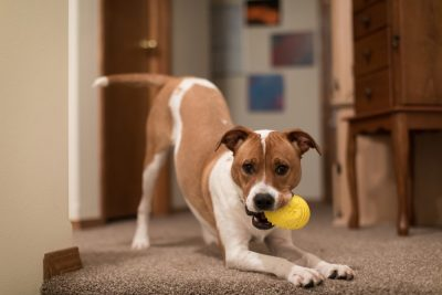 5 Creative Indoor Enrichment Ideas for Your Pet